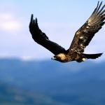 Prawdziwa bajka o orle